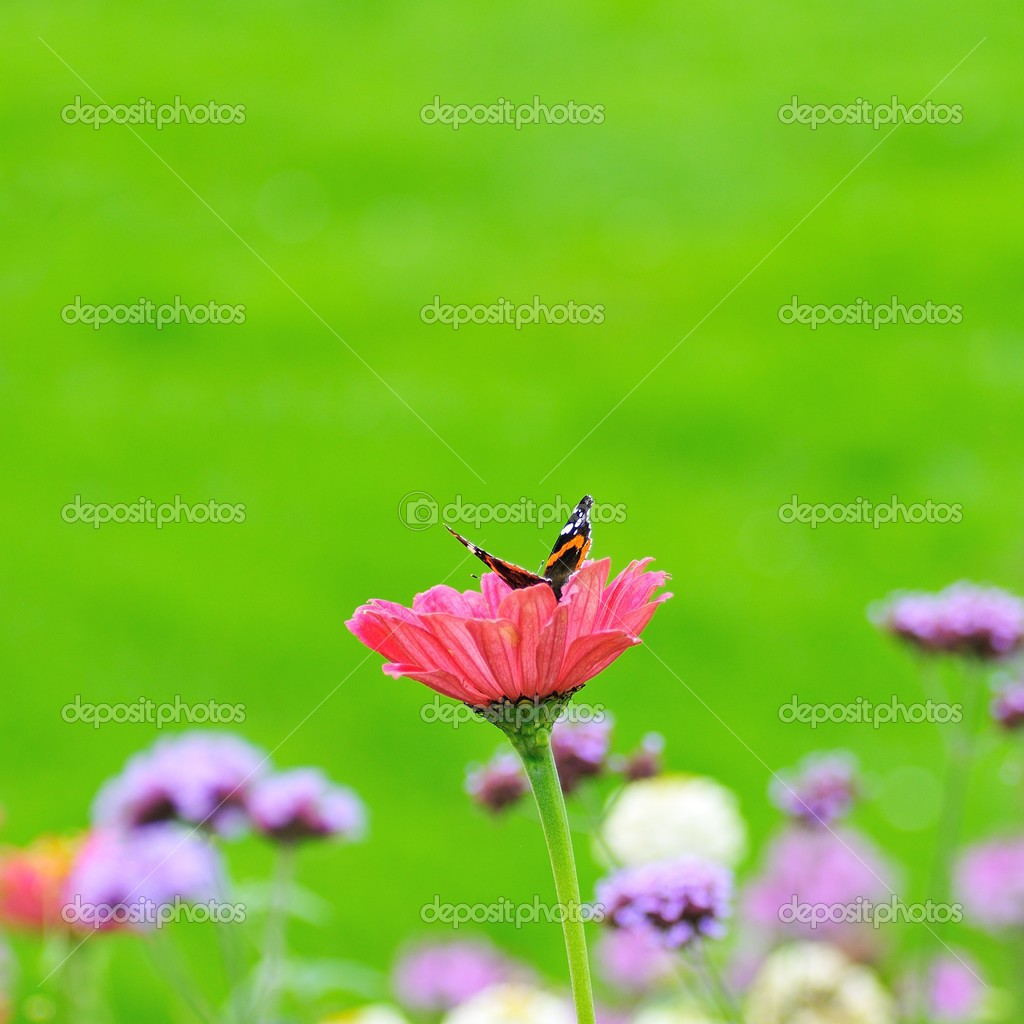butterfly on a flower blooms and greenl background