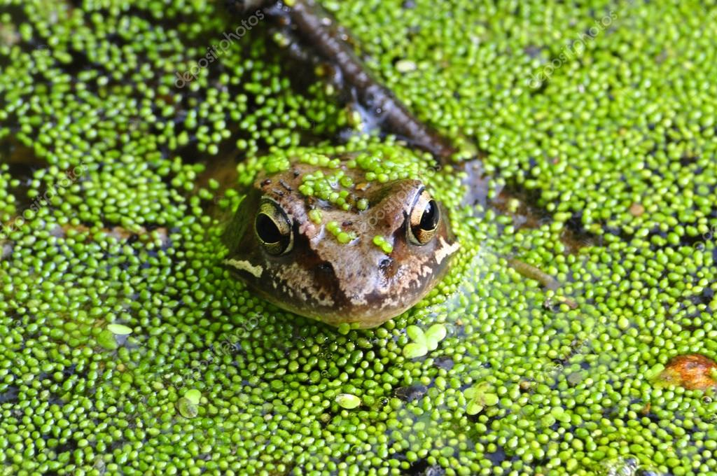 Image result for frog in swamp