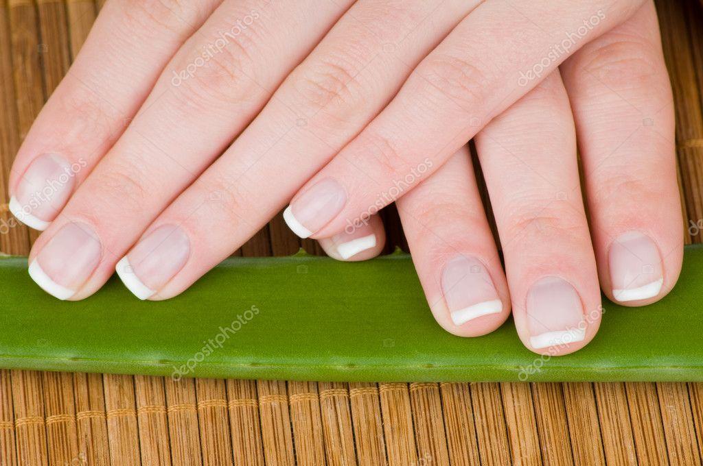 manos femeninas con francés manicura y aloe hojas sobre fondo de ...