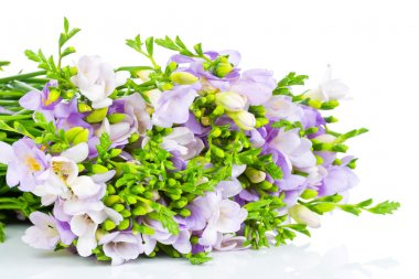Lilac freesia isolated on white