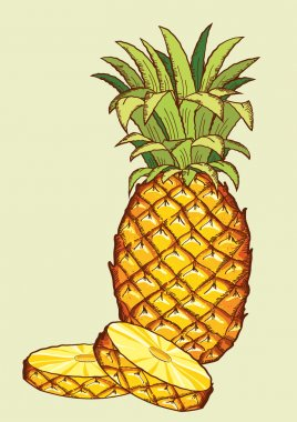 Pineapple fruit.Vector fresh isolated for design