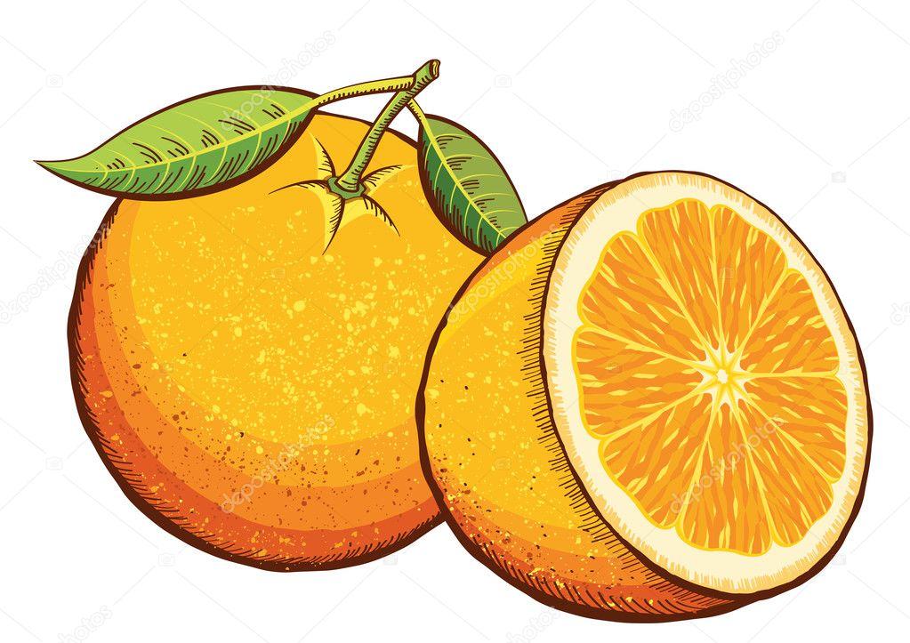 Orange fruits isolated on white.Vector illustration