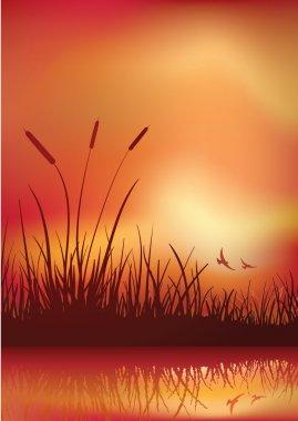 sunset in marshland.
