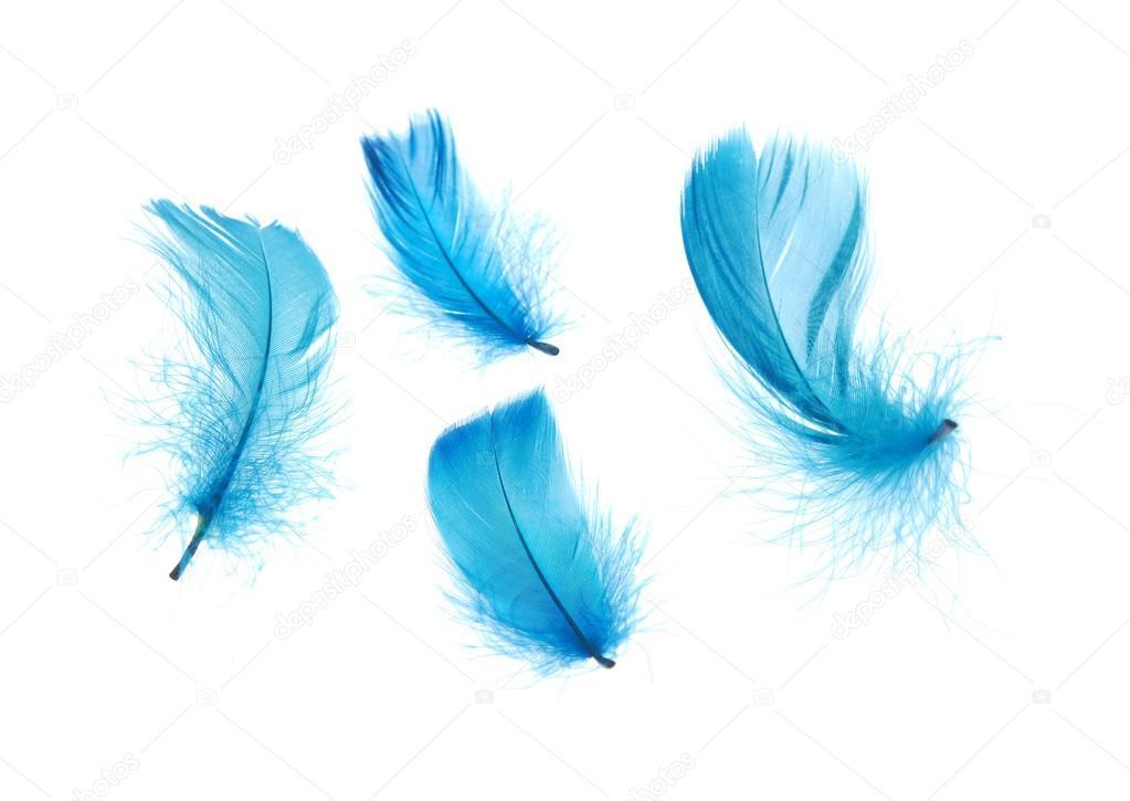 Resultat d'imatges de plumas azules