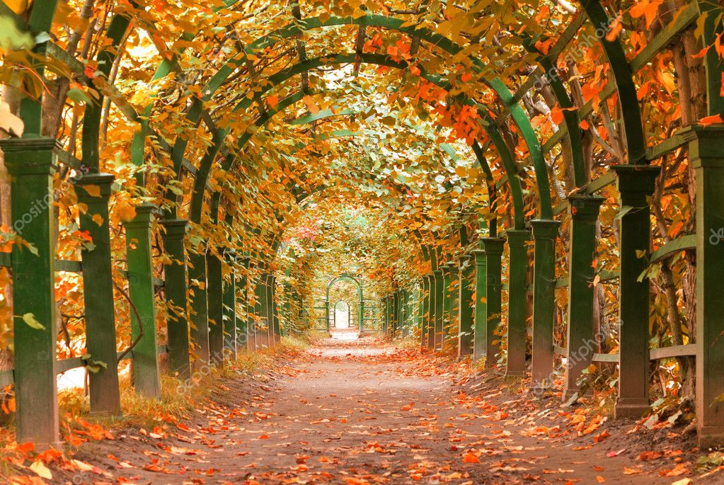 Autumn garden tunnel