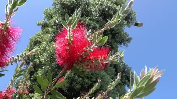 krásný jarní květ scéna s fialové macešky a odlesků objektivu