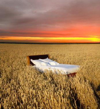 Bed in a grain field - concept of good sleep