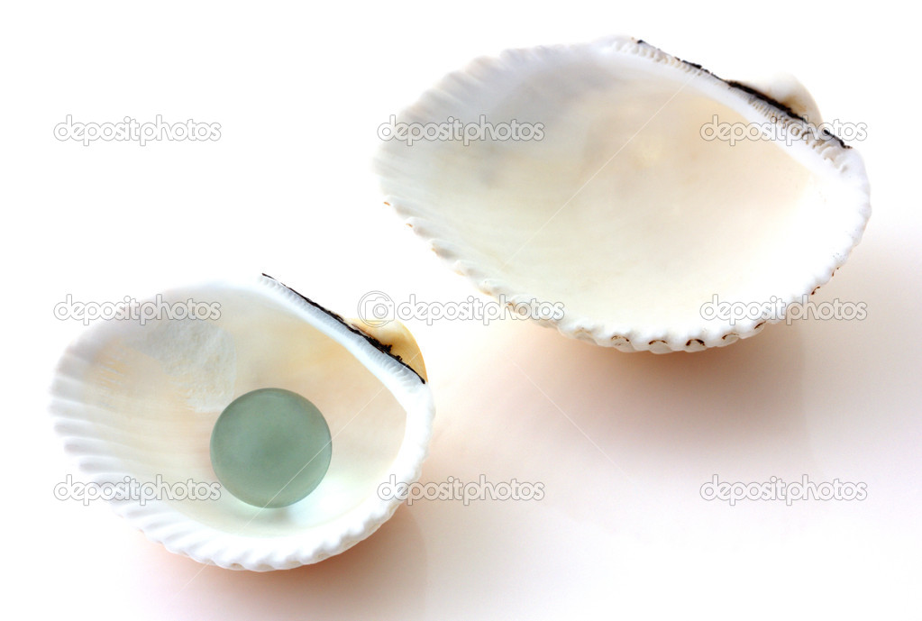Shells with pearl isolated