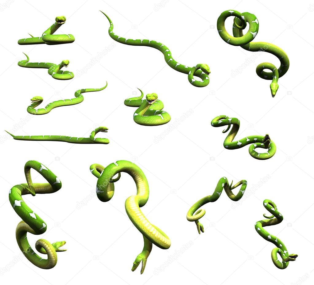 Various python snake poses