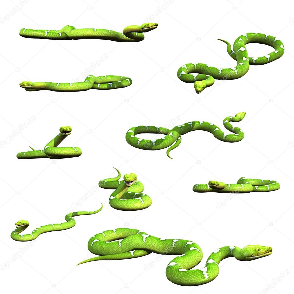 Various python snake poses collection set 3