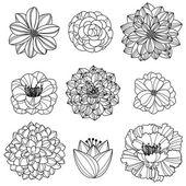 Vektoros gyűjtemény kézzel rajzolt virágok