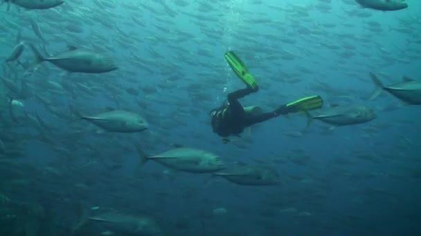 Huge scholl of Bigeye trevally (Caranx sexfasciatus) with a diver