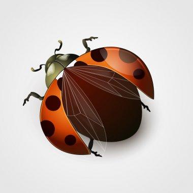 Vector illustration of a ladybug stock vector