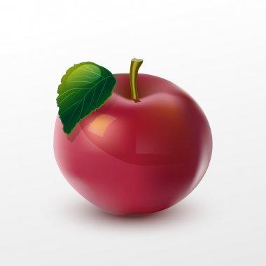Vector illustration of apple. stock vector
