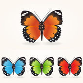 Vector butterfly collection.White bacground.