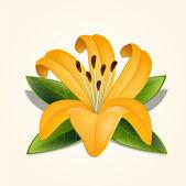 Vektor lily květina. Vektorové ilustrace.