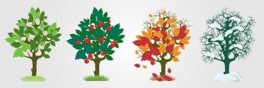 Seasons trees. Vector illustration stock vector