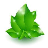 zöld levelek kórokozó-átvivő ábrázolása.
