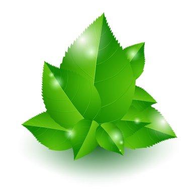 Vector illustration of green leaves. stock vector