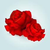 Vektor rózsák. Vektoros illusztráció.