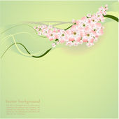 Spring background with spring flowers - vector illustration