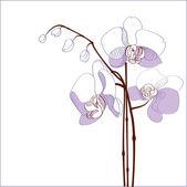 Elegance branch of purple orchids - vector illustration
