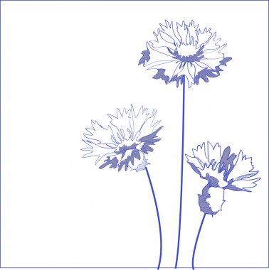 Blue cornflower (Centaurea cyanus) - vector illustration stock vector