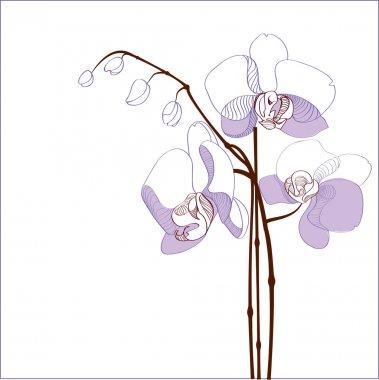 Elegance branch of purple orchids - vector illustration stock vector