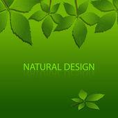 vector design of Nature