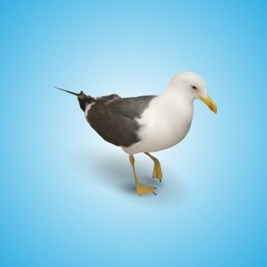 Illustration of seagull,  vector illustration stock vector