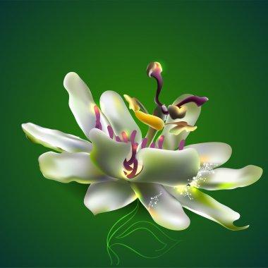Passion flower.  vector illustration stock vector