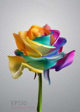Beautiful colorful rose, vector illustration stock vector