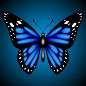Kék pillangó sötét háttér, vektor