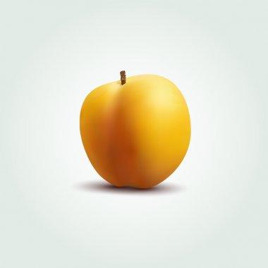 Vector peach vector illustration stock vector