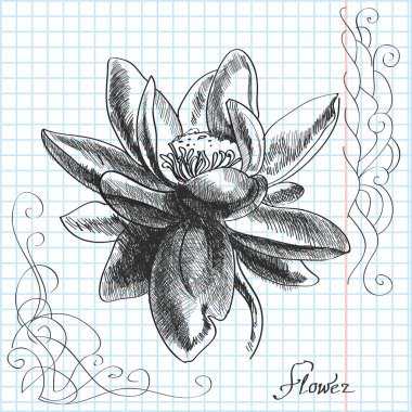 Vector hand drawn illustration of a flower stock vector