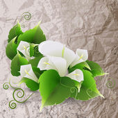 White lily on crumpled paper background