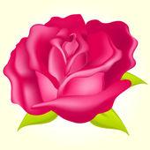 Gyönyörű Rózsa vektoros illusztráció