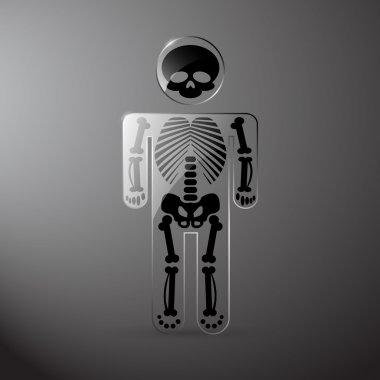 Vector glassy anatomy skeleton stock vector