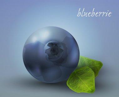 Fresh Blueberries. Vector illustration. stock vector