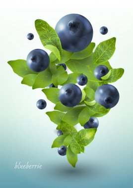 Splash of blueberries. Vector illustration. stock vector