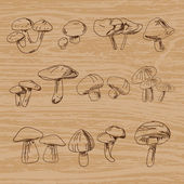 Reihe handgezeichneter Jahrgangspilze. Vektorillustration