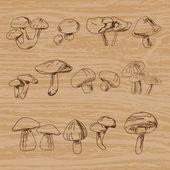 Set of hand-drawn vintage mushrooms. Vector illustration