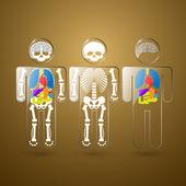 ilustrace lidské anatomie