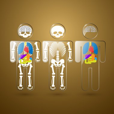 Illustration of human anatomy stock vector