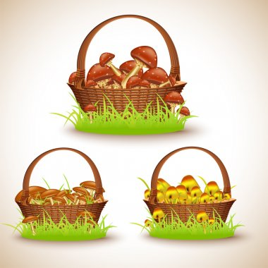 Baskets with mushrooms, vector illustration stock vector
