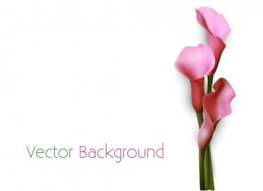 Vector background with pink calla lily flowers. stock vector