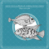 Velká encyklopedie zvířat planety Země, vintage ryby ilustrace