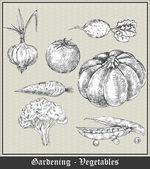 Kertészeti. Vintage banner, a zöldségek és gyümölcsök. Hagyma, paradicsom, répa, sárgarépa, squash, brokkoli, karfiol, zöldborsó. Vektoros illusztráció