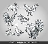 sada domácí zvířata kohout, slepice, Turecku, králík, kachna, Husa. vektorové ilustrace
