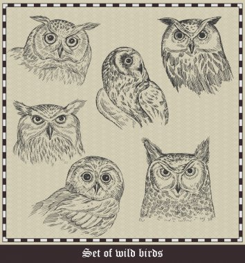 Set of birds.Owls. Vector illustration stock vector